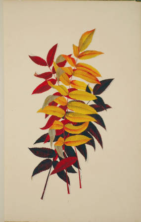 Sumac illustraion from Autumnal Leaves by Ellen Robbins.