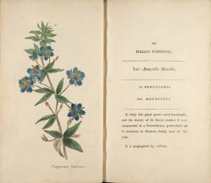 Italian Pimpernel. Henrietta Maria Moriarty. Page 49.