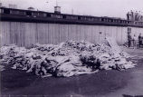 Mauthausen Concentration Camp Casualties