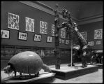 Hall 35, Fossils and Mesozoic Fossils. Glyptodon and Megatherium