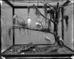 Heron [bird] diorama group