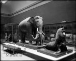 Hall 20 Pedestals with Elephant and baby elephant (bad taxidermy