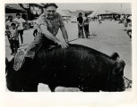 Largest Boar contest winner, 1985