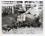 Grand Champion Berkshire Sow, 1957