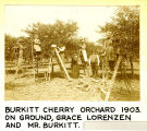 Burkitt Cherry Orchard