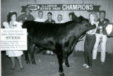 1984 Illinois State Fair Champion Steer