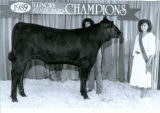 1989  Illinois State Fair Junior Breeding Beef Show