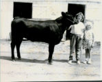 Johna Quiram with Her Red Poll Cattle
