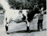 1988 Matt Lowry Wins Champion Shorthorn Steer Honors