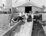 Cope Farm