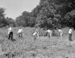 Jaycees cutting weeds, 1945