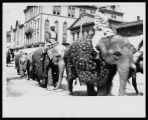 Elephants in a Circus Parade